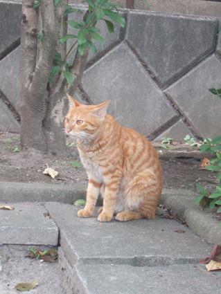 マンションのノラ【たぶん】猫さん